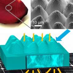 Biomimikri: Eine Solarzelle ist eine Fläche ist eine Rose...