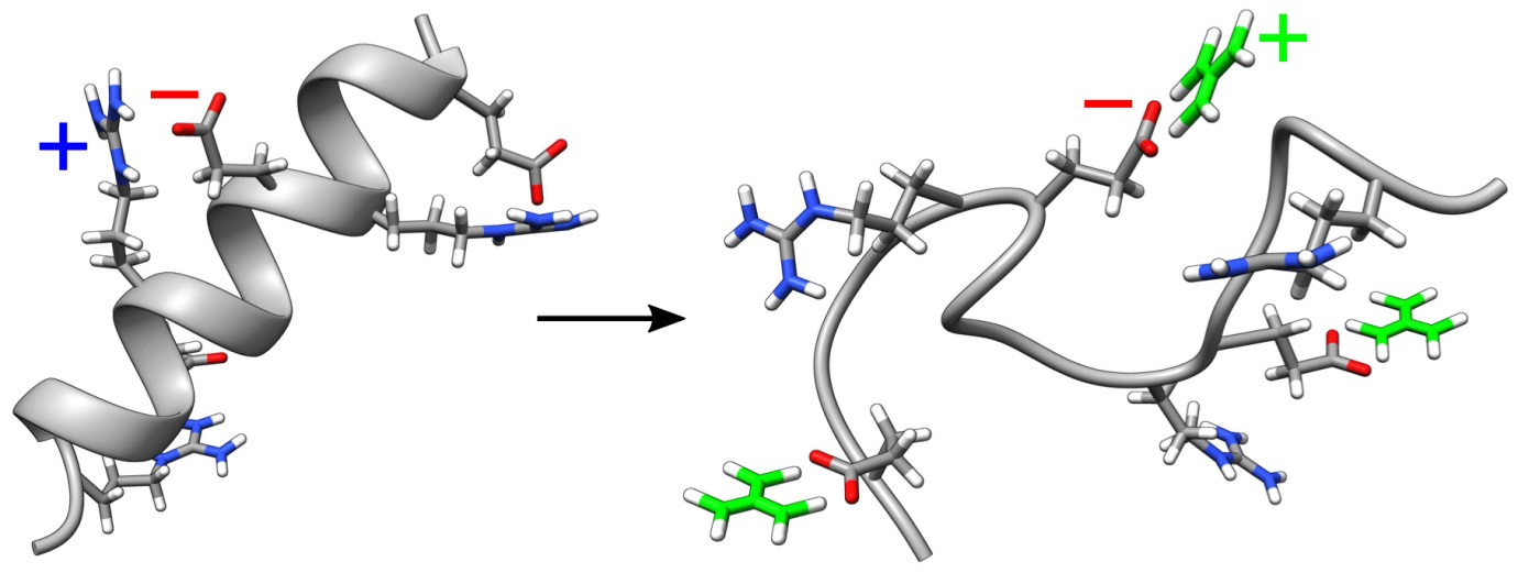 Left: Without guanidinium, the folded structure – in this case a helix – is kept together by the attractive electrical force between the negatively charged oxygen atoms (red) and the positively charged nitrogen atoms (blue): the salt bridges. Guanidinium